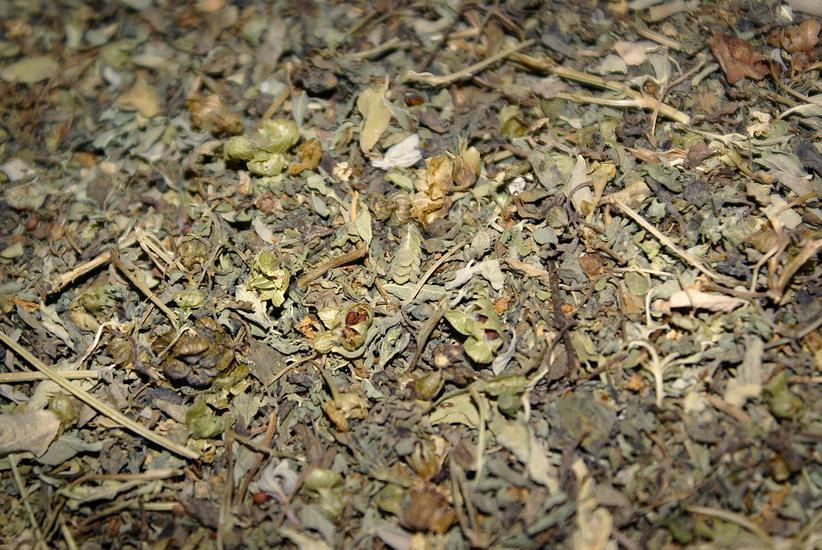 египетский чай для похудения фото