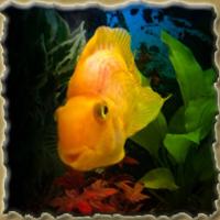 Туристическая программа Изумрудного города Золотая рыбка