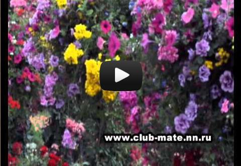 Видео Клуба МАТЭ-Ароматерапия