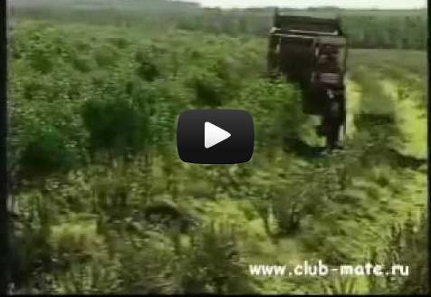 Видео Клуба МАТЭ-Технология сбора матэ